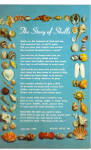 Florida Shells The Story of Shells p30141