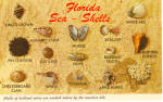Florida Shells 15 Shells Shown Named Postcard p30144