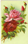 Vintage Postcard printed with roses on front