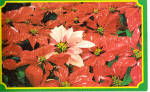Poinsettias on Bird & Bloom Subscription Ad Card