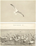 Click here to enlarge image and see more about item p3077: Seagulls Vintage Postcard  Lot 2 p3077