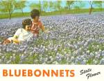 Texas State Flower Bluebonnets p31077