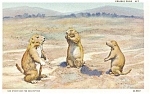 Click here to enlarge image and see more about item p3120: Prairie Dogs Postcard p3120