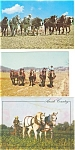 Click here to enlarge image and see more about item p3213: Amish Horse Teams at Work Postcard Lot of 3