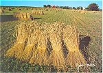 Wheat Shocks Lancaster County PA Postcard