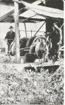 Click here to enlarge image and see more about item p32800: Logging in Washington State Donkey Engine