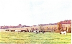 Click here to enlarge image and see more about item p3398: Cumberland Valley Cows Postcard