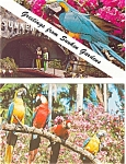 Click here to enlarge image and see more about item p3450: Sunken Gardens, FL  Postcard Lot of 2 p3450