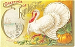 Click here to enlarge image and see more about item p3482: Thanksgiving White Turkey Postcard