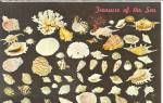 Click here to enlarge image and see more about item p34982: Treasures of the Sea Shell p34982