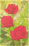 Click here to enlarge image and see more about item p3745: Beautiful Roses Postcard p3745