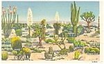 Click here to enlarge image and see more about item p3825: Varieties of Desert Cactus Postcard 1944