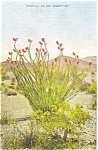 Ocotillo on the Desert Postcard Linen WWII