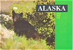 Click here to enlarge image and see more about item p3901: Black Bear Cub Alaska Postcard p3901
