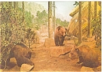 Click here to enlarge image and see more about item p3904: Grizzley Bears Chicago Museum Postcard