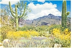 Click here to enlarge image and see more about item p3922: Springtime on the Arizona Desert Postcard