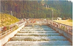 Click here to enlarge image and see more about item p3967: Bonneville Dam Fish Ladders Postcard