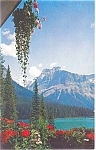 Click here to enlarge image and see more about item p3998: Canadian Rockies Glacier Postcard