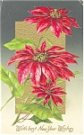 Click here to enlarge image and see more about item p4016: Poinsettias  New Years  Postcard