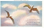 Click here to enlarge image and see more about item p4260: The Sea Gulls Postcard p4260