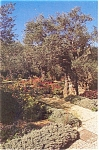 Click here to enlarge image and see more about item p4500: Gardens of Gethsemane Jerusalem Israel Postcard p4500