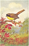 Click here to enlarge image and see more about item p4539: Maryland Yellow Throat Postcard p4539