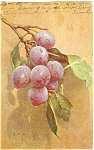 Click here to enlarge image and see more about item p4565: Grapes Postcard ca 1906