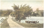 Click here to enlarge image and see more about item p4635: Cows Rural Scene Signed Postcard