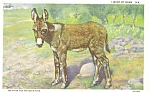 Click here to enlarge image and see more about item p4643: Baby Burro I Want My Mama Postcard p4643