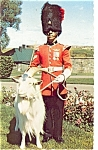 Click here to enlarge image and see more about item p4724: Mascot of the 22e Regiment Postcard