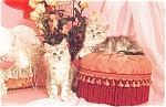 Click here to enlarge image and see more about item p4747: Adorable Kittens  Postcard p4747