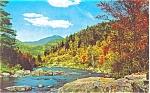 Scenic Woodland Stream  Postcard