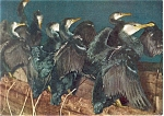 Click here to enlarge image and see more about item p4754: Cormorants on River Nagara Japan  Postcard