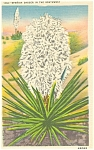 Click here to enlarge image and see more about item p4817: Spanish Dagger Postcard Linen p4817