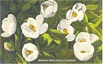 Click here to enlarge image and see more about item p4831: Magnolias State Flower of LA Postcard Linen