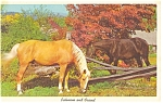 Click here to enlarge image and see more about item p4845: Palomino and Friend Postcard