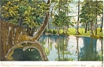Scenic Southern Lake  Postcard Glitter