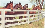 Click here to enlarge image and see more about item p4877: Horses Overlooking Corral  Fence Postcard
