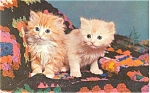 Click here to enlarge image and see more about item p5076: Two Adorable Kittens Postcard