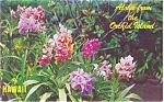 Hawaiian Island Orchids Postcard