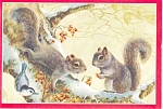 Squirrels, Art by Richard G. Barth Postcard p5543