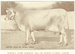 Click here to enlarge image and see more about item p5554: Jersey Cow Sophie 19th of Hood Farm