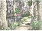 Click here to enlarge image and see more about item p5785: Charleston SC Cypress Gardens Pathways p5785