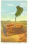 Sherman Hill Wyoming, Tree Growing from Rock Postcard