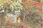 Click here to enlarge image and see more about item p6115: Rose Covered Home California Postcard