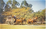 Stage Coach at Knott s Berry Farm Postcard p6120