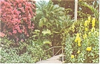 Click here to enlarge image and see more about item p6745: Sunken Gardens Florida Postcard