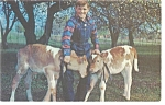 Click here to enlarge image and see more about item p6828: Future Farmer with a pair of Calves Postcard