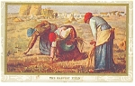 The Harvest Field Vintage Postcard