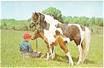 Click here to enlarge image and see more about item p7018: Mare and Colt with Child Postcard p7018